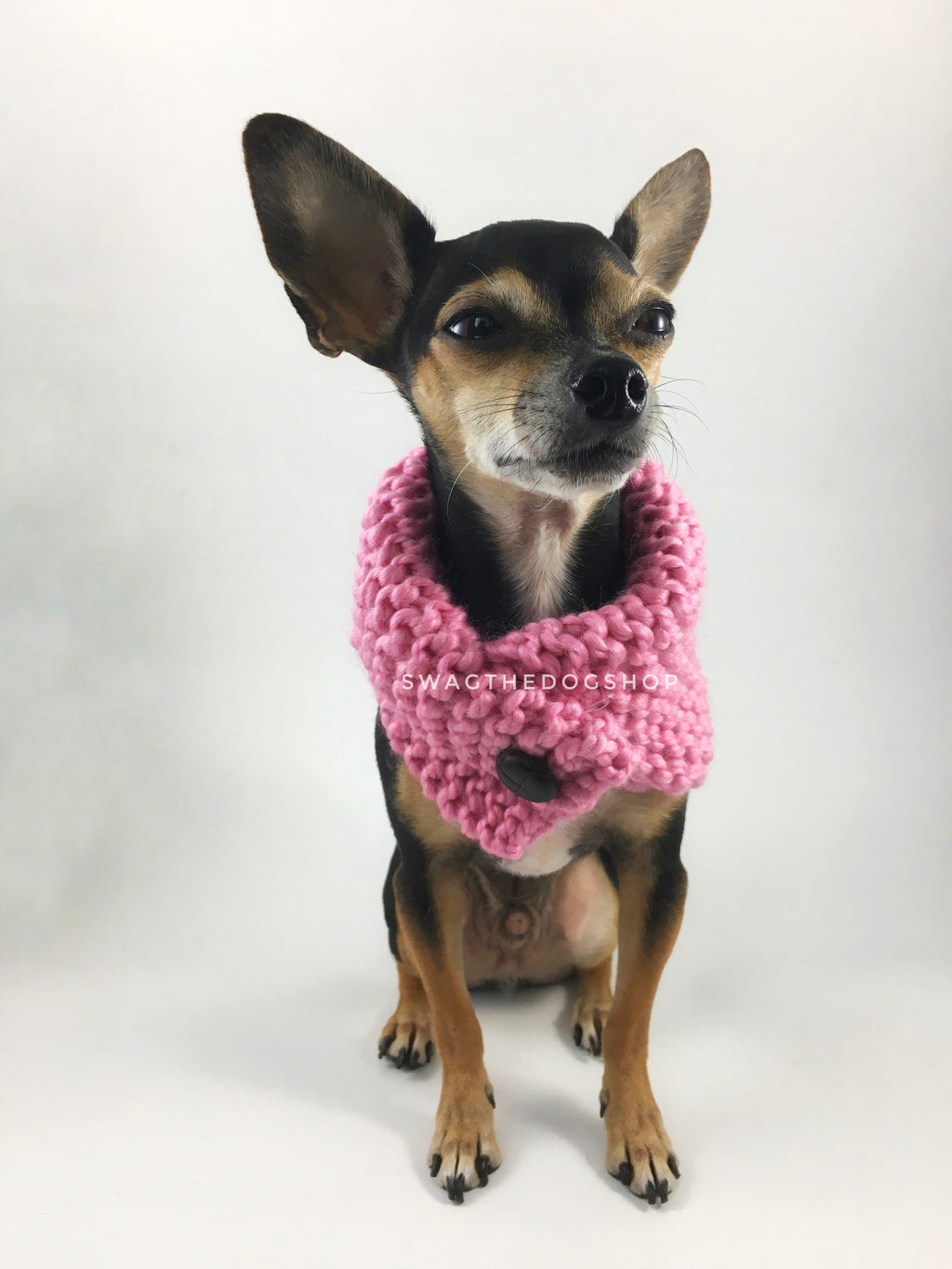 Pink Enough Swagsnood - Full Front View of Cute Chihuahua Dog Wearing Pink Color Dog Snood with Accent Button