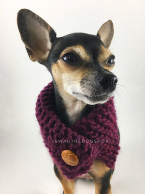 Plum Swagsnood -  Close Up View of Cute Chihuahua Dog Wearing Plum Color Dog Snood with Accent Button