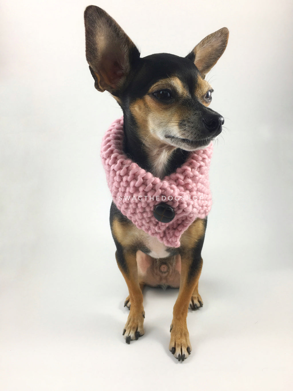 Rosewater Swagsnood - Full Front View of Cute Chihuahua Dog Wearing Dusty Rose Pink Color Dog Snood with Accent Button