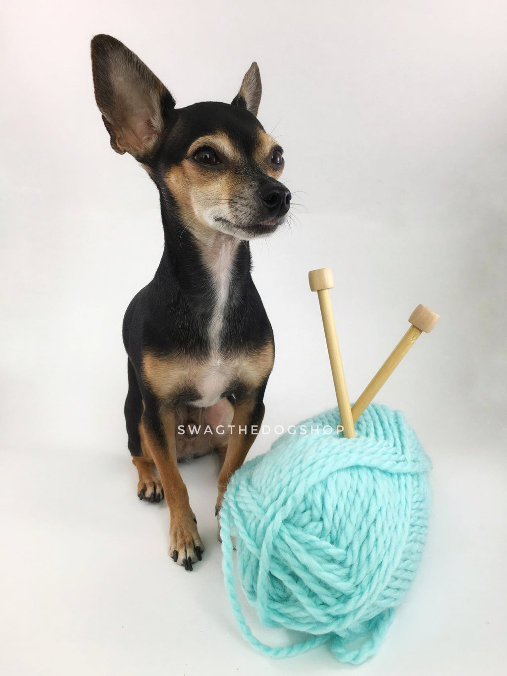 Turquoise Swagsnood - Yarn with Cute Chihuahua Dog. Turquoise Color Alpaca Yarn Dog Snood with Accent Button