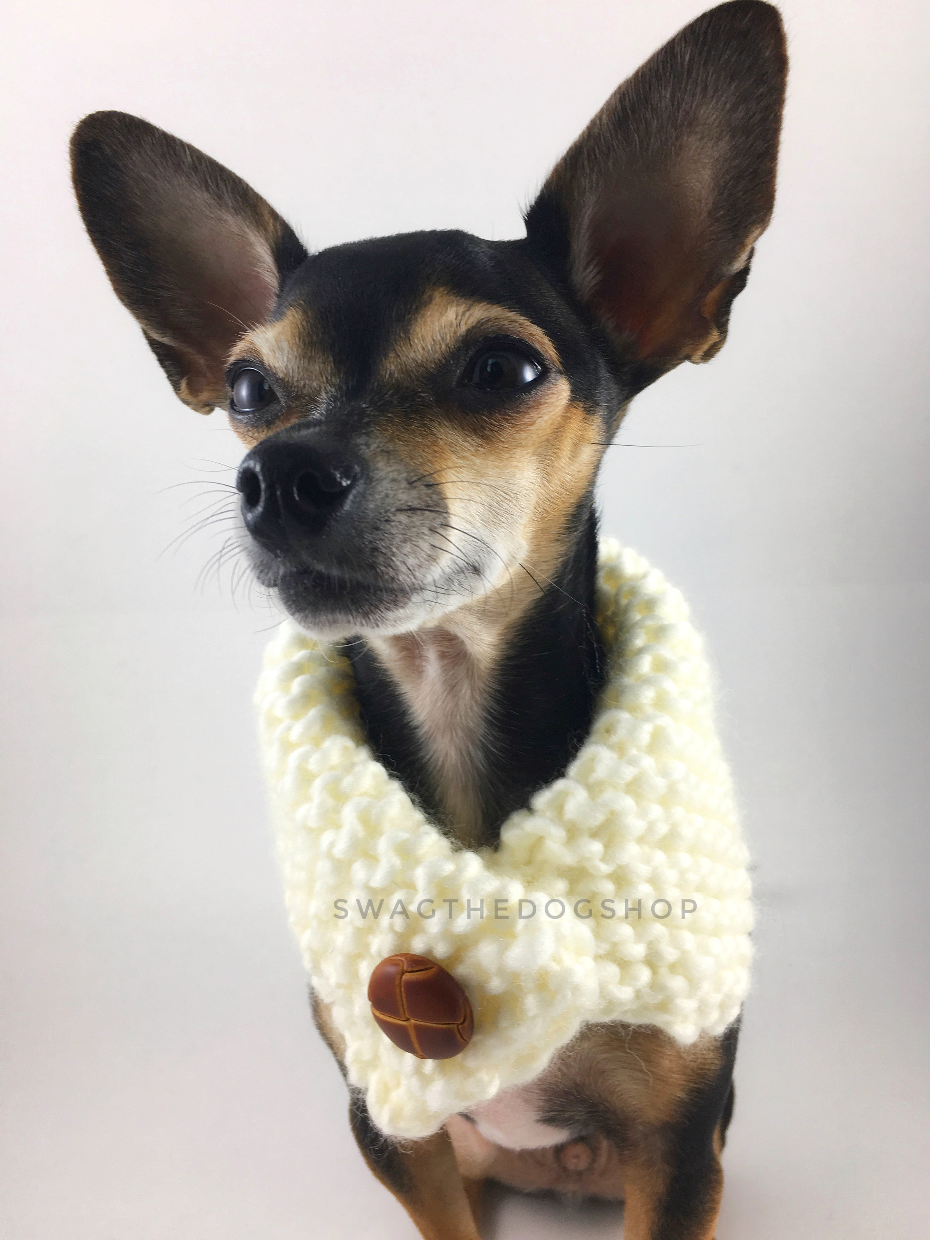 Winter Cream Swagsnood - Close Up View of Cute Chihuahua Dog Wearing Winter Cream Color Dog Snood  with Accent Button