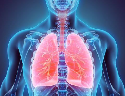 model of how to improve lung function naturally