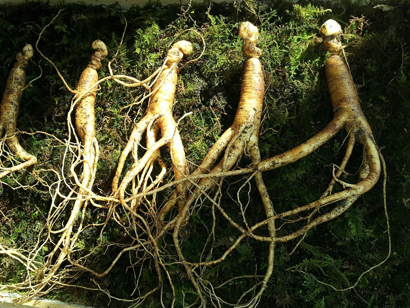 What is Ginseng? Benefits and Uses for this Ancient Herb