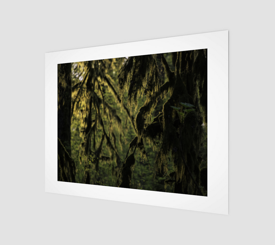 Moss cloaked forest at sunset, Haida Gwaii (Naikook Provincial Park) Art Print