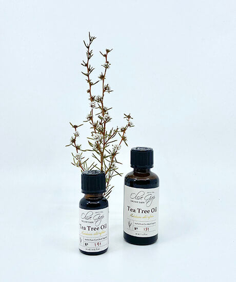 Olive Gap Farm Pure Tea Tree Essential Oil - Haven Botanical - byron bay