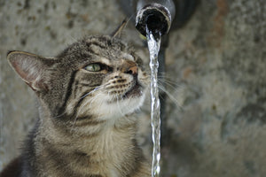 How to keep your cat hydrated