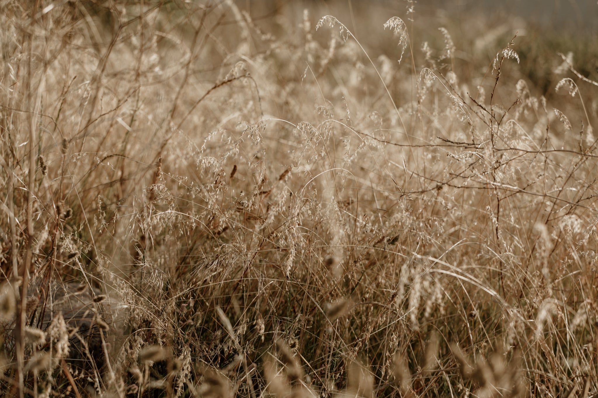 Natural textures of wild grasses in Cape Town, South Africa