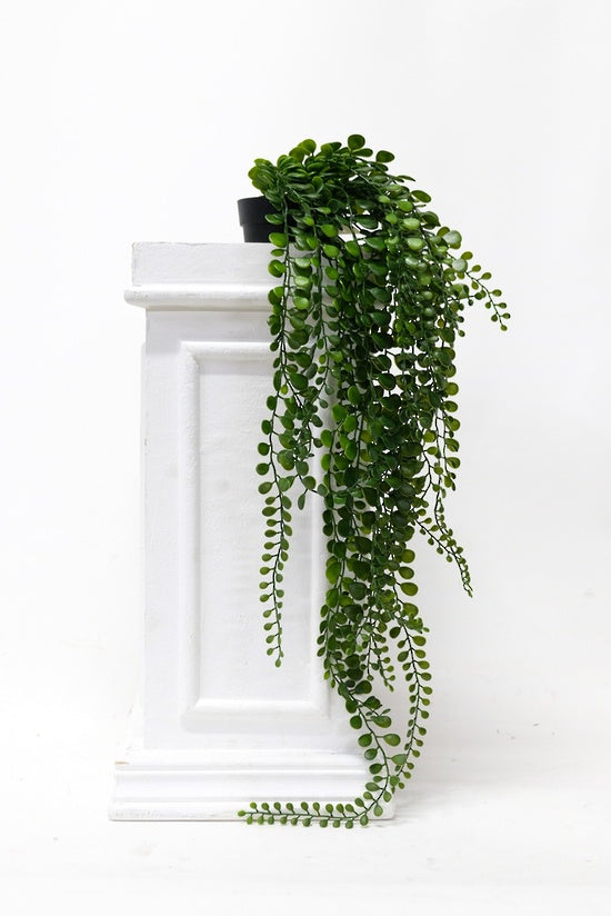 Pea Leaf Hanging Bush Potted 61cm
