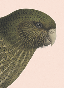 Hushed Kakapo Notebook - Blush