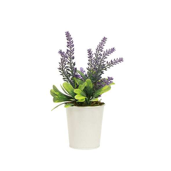 Potted Lavender Small