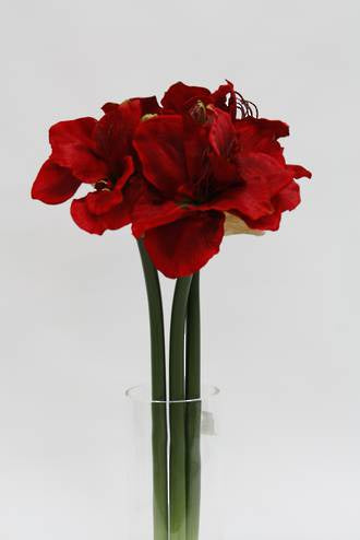 Amaryllis Spray Red