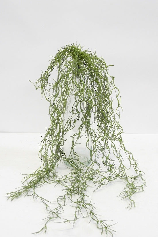 Tillandsia Hanging Bush