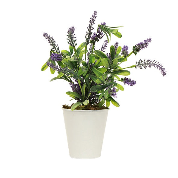 Potted Lavender Large