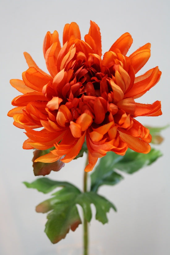 Single Chrysanthemum Orange