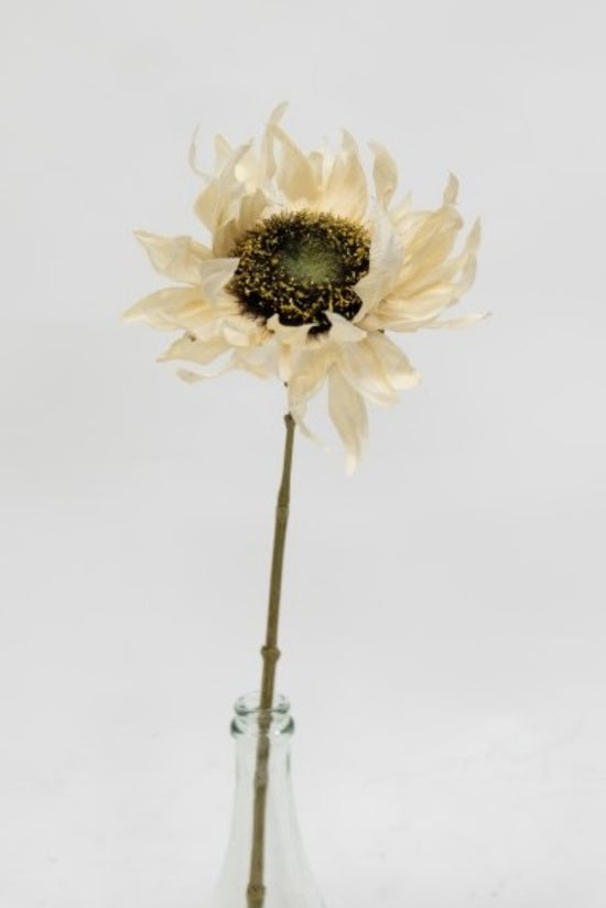 Dried Sunflower Ivory