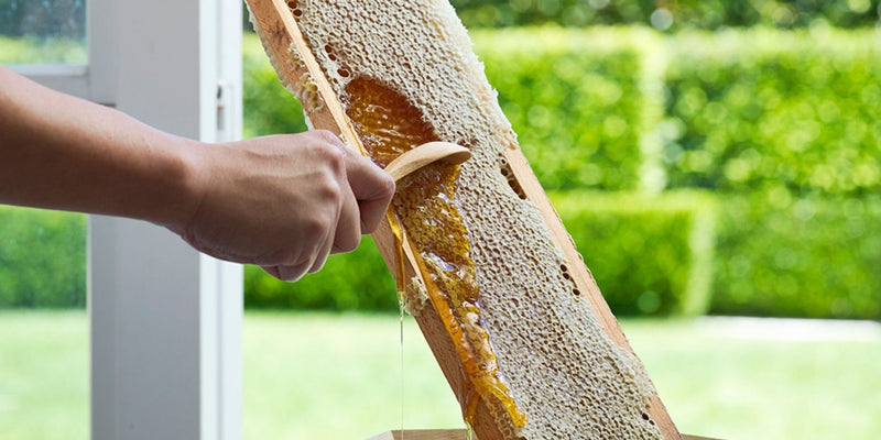 Propolis - A Powerful Natural Protector