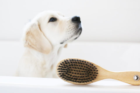 All Natural Grooming Tips for Dogs