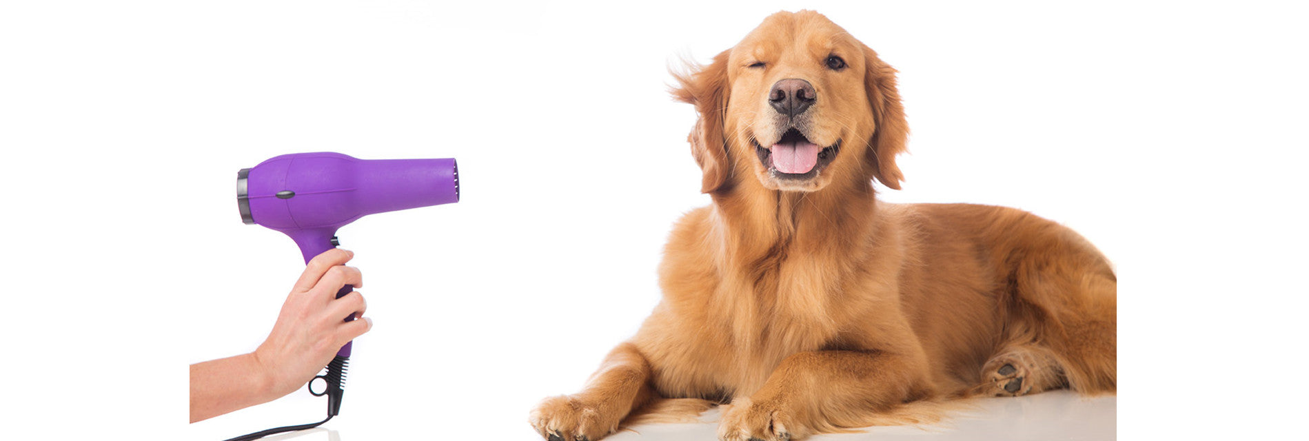 Dog Grooming Made Easy