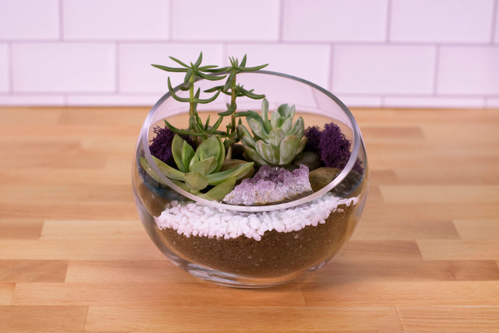 DIY KIT Sloped Glass with Crystal Succulent Terrarium