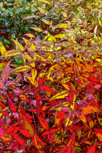 Load image into Gallery viewer, God's Profligacy, Autumn Tryptic #1, 2, 3