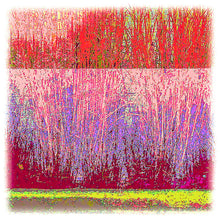 Load image into Gallery viewer, Urban Grasses in Reds