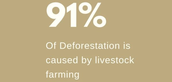 91% of deforestation is caused by livestock farming