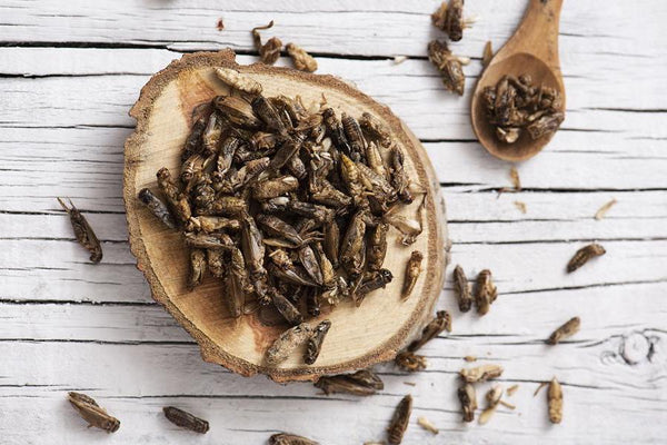 Edible insects for human consumption
