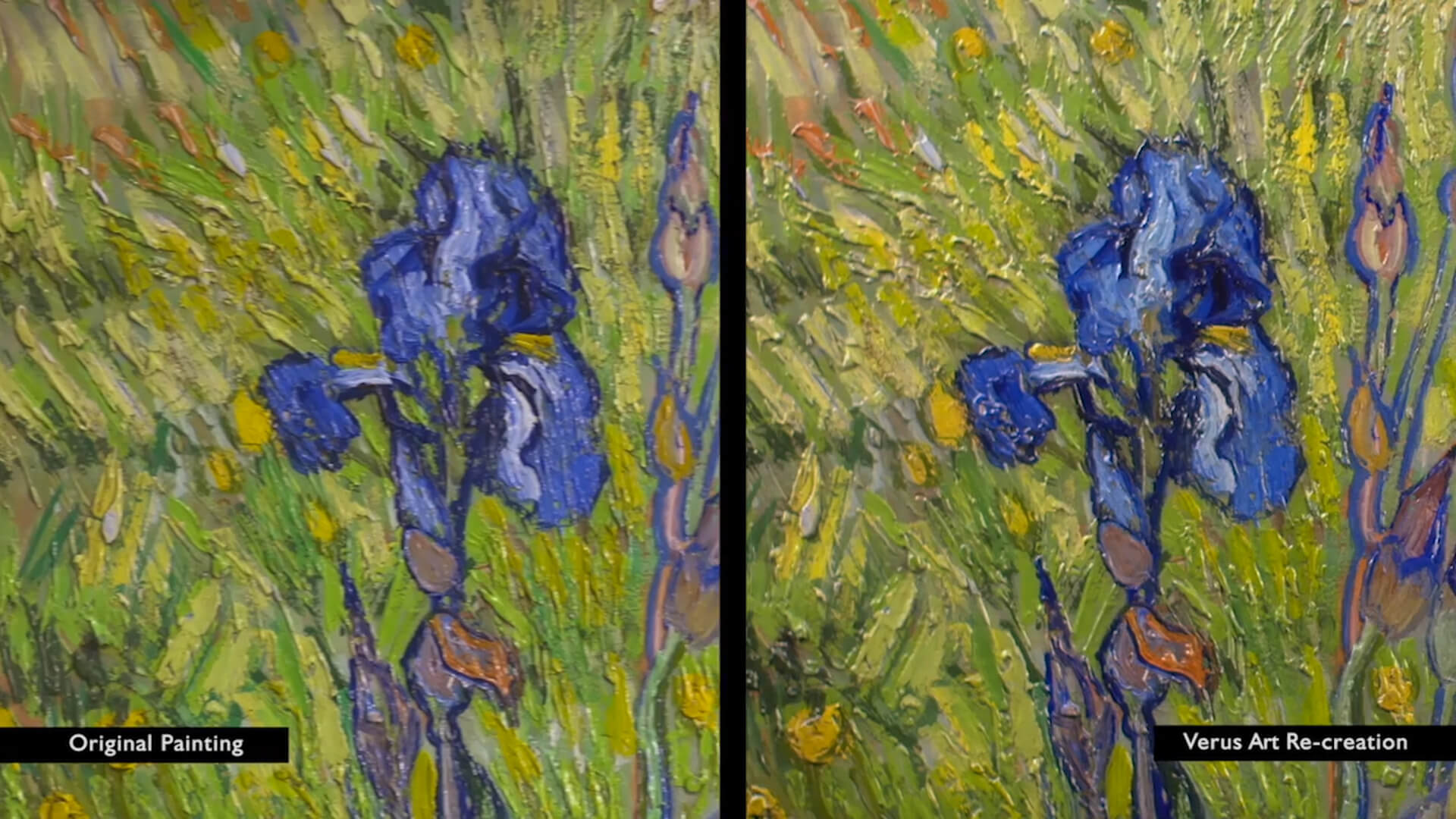 Comparison of Van Gogh Iris to Arius Textured Reproduction