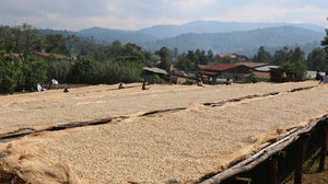 Ethiopia West Arsi - medium roast