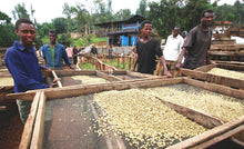 Load image into Gallery viewer, Ethiopia West Arsi - medium roast