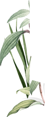 Green leaf png image on Yoga wear product page