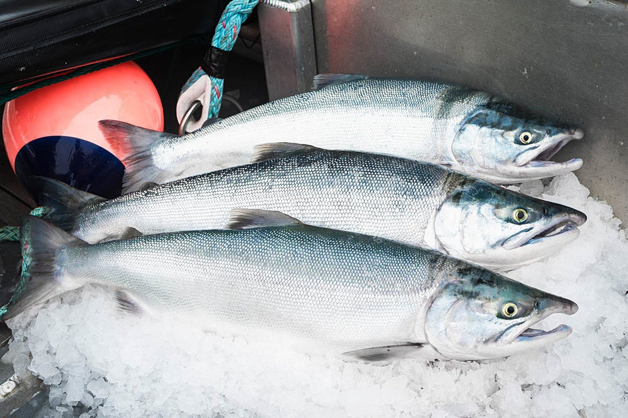 Know your fish: The Sockeye Lifecycle
