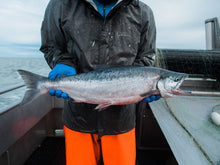 Load image into Gallery viewer, SALMON FILLETS 20 LB CASE • $16.99/lb