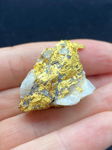 Natural Gold Specimen 41.7 grams total