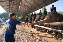 Load image into Gallery viewer, Elephant Jungle Sanctuary - Half Day Tour