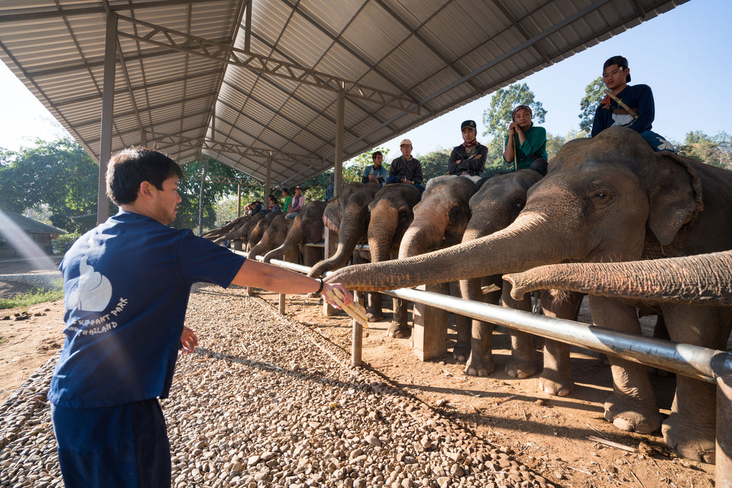 Elephant Jungle Sanctuary - Half Day Tour