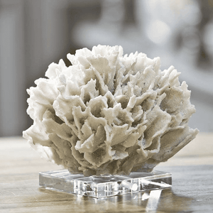 Coral On Crystal Stand Decor