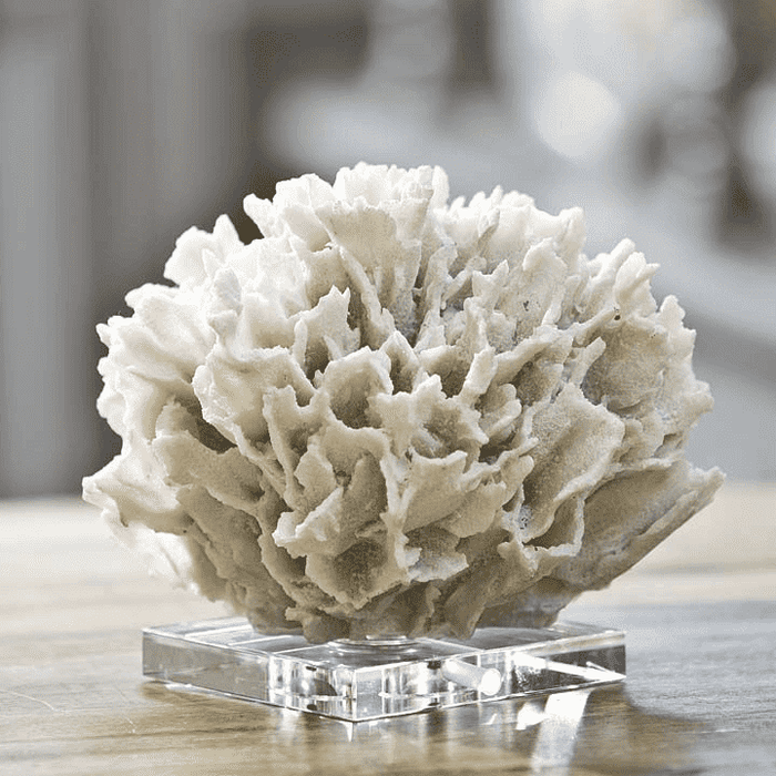 Coral On Crystal Stand