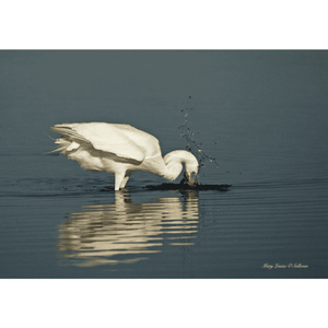 White Phase Spearing Fish, Photography on Canvas Art
