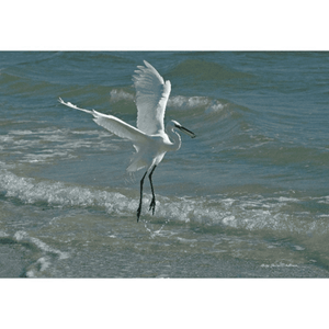 Egret in Surf Photograph on Canvas Art