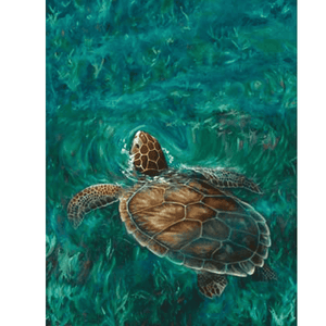 Sea Turtle Giclee Art
