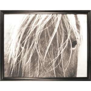 "Framed Photography Horses ""Blonde"" Art"