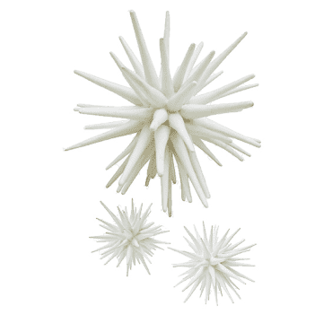 White Sea Urchin ( 3 sizes)