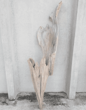 Driftwood Cone 01 Wall Decor