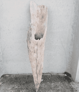 Driftwood Cone 03 Wall Decor