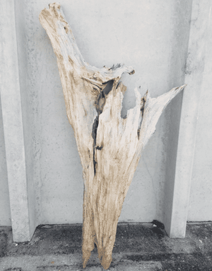 Driftwood Cone 05 Wall Decor