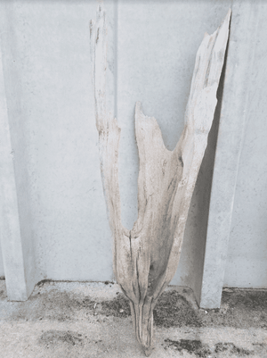 Driftwood Cone 06 Wall Decor