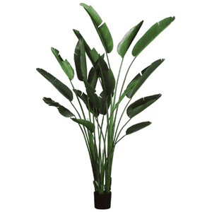 "Bird of Paradise Plant - 93"" High Greenery"