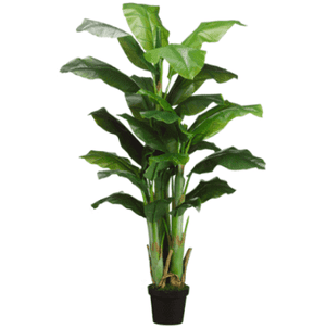 Banana Tree Greenery