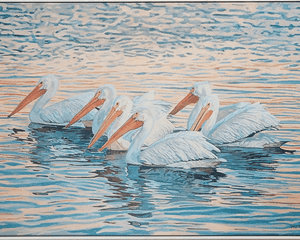 Floating White Pelicans, Giclee